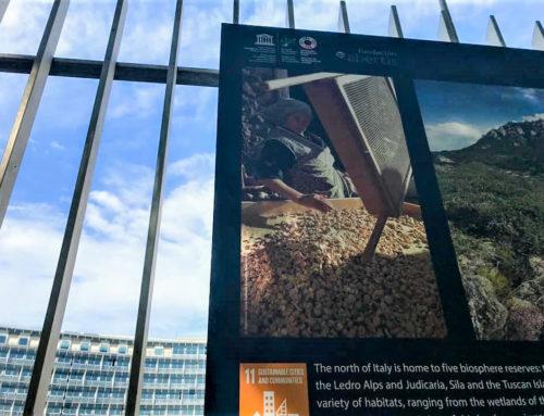 La storia di Palmina: dai castagneti dell'Appennino all'Unesco di Parigi